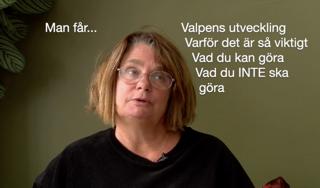 """Live med Cilla på Play: """"Valpens, och hundars, socialisering"""", 10/11"""